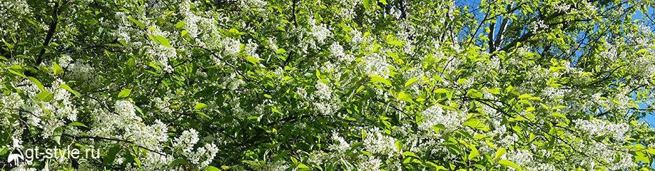 лето в белом фото